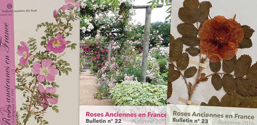 Association Roses Anciennes en France - Welcome